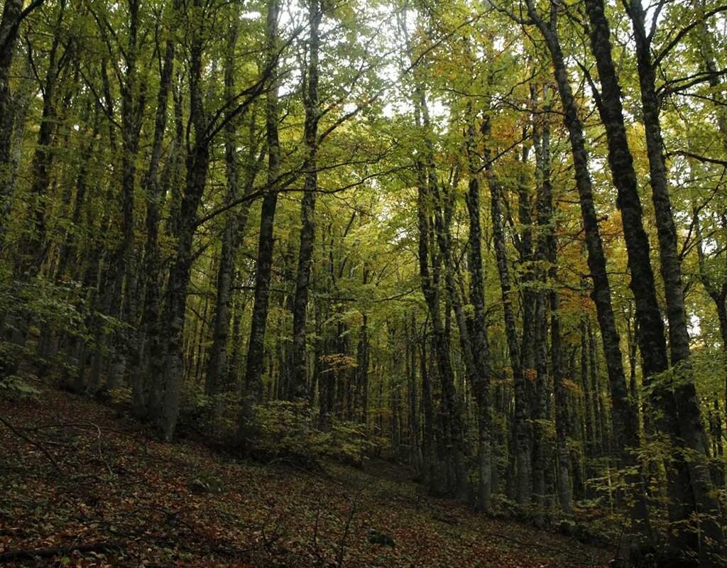 il-bosco-in-autunno-alberi
